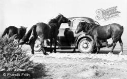 Dartmoor Ponies c.1965, Dartmoor