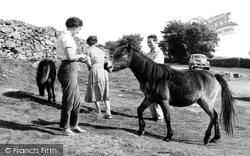 Dartmoor, Dartmoor Ponies c.1965