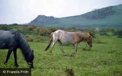 Dartmoor Ponies c.1995, Dartmoor
