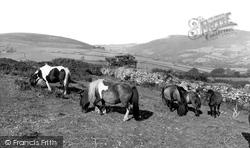 Ponies c.1965, Dartmoor