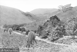 Dartmoor, Veiw On Old Manaton Road c.1960