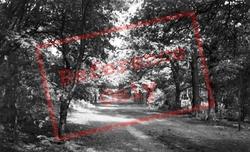 Forest c.1955, Delamere