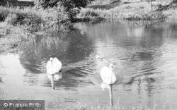 Delamere, Swans c.1955