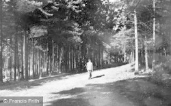 Delamere, The Forest c.1955