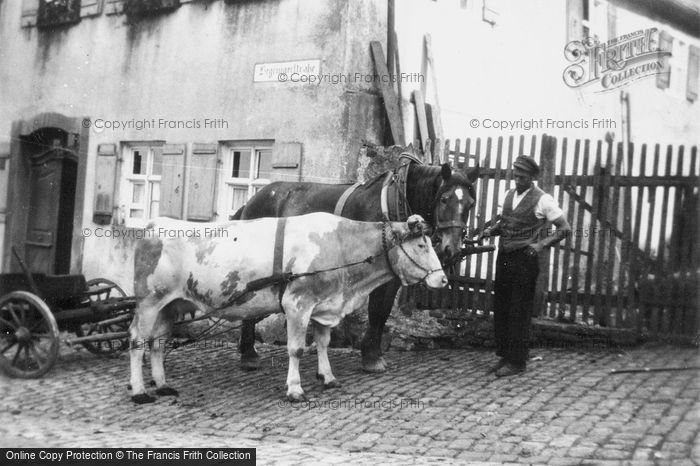 Photo of Dinkelsbuhl, Ox And Horse And Carts c.1939
