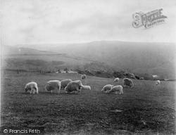 Dolwyddelan, Sheep Grazing c.1890