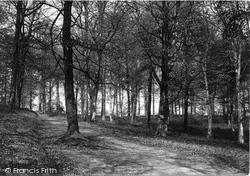Dorking, In Glory Woods 1891