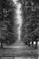 Dorking, Lime Tree Avenue, Betchworth Park 1906