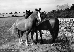 Duntisbourne Abbots, Grazing Horses c.1960