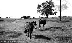 Duntisbourne Abbots, Horses Grazing c.1960