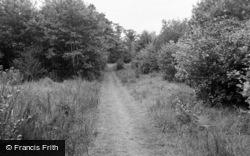 Path To The Beach 1963, Dyffryn Ardudwy