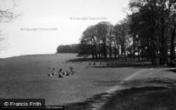 Easebourne, Deer In Cowdray Park 1938