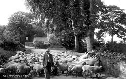 East Barsham, Sheep Going To Market 1929