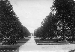 East Budleigh, Bicton House, Avenue 1890