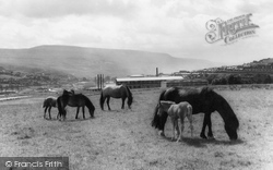 Ebbw Vale, Mountain Ponies c.1960