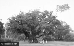 Edwinstowe, Major Oak, Sherwood Forest c.1960