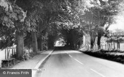 Elham, Avenue Of Trees c.1960
