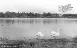 Swans On The Mere c.1955, Ellesmere