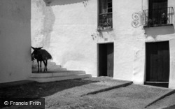 Donkey In The Village 1960, Estepona