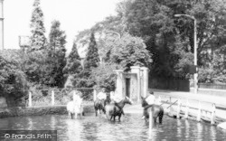Ewell, Horses In The Pond, Old Village c.1965