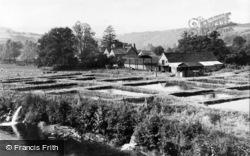 The Trout Farm c.1965, Exebridge