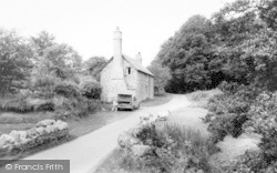 Exmoor, Exmoor Sheep c.1965