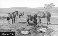 Exmoor, Ponies c.1960