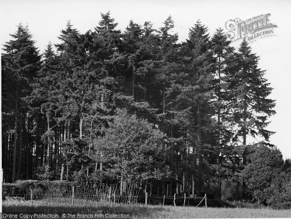 Photo of Farley Green, Pine Woods, Tree Tops Holiday Camp c.1955