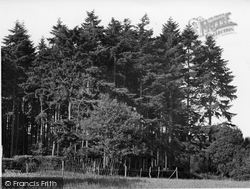 Farley Green, Pine Woods, Tree Tops Holiday Camp c.1955