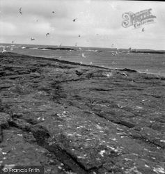 Farne Islands, 1959