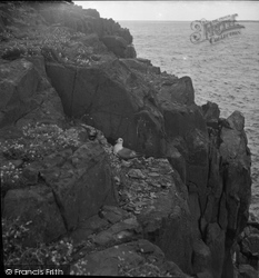 Farne Islands, Fulmer Petrel 1959
