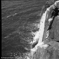 Farne Islands, The Shag 1959