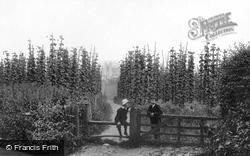 Hop Gardens 1904, Farnham
