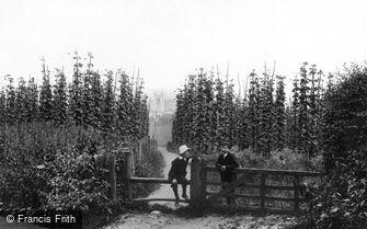 Farnham, Hop Gardens 1904