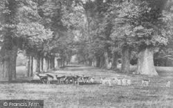 Farnham, Park Deer 1895
