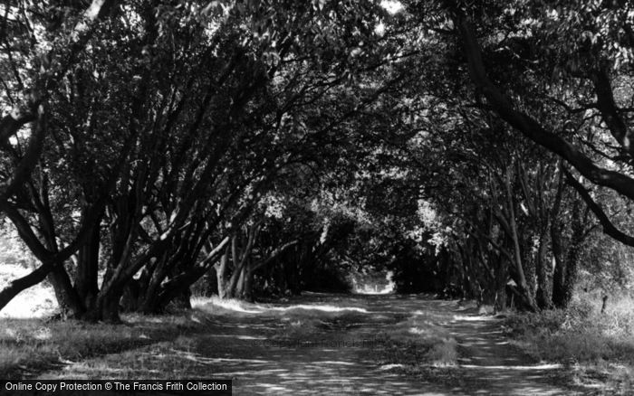 Photo of Ferring, Ilex Way c.1955