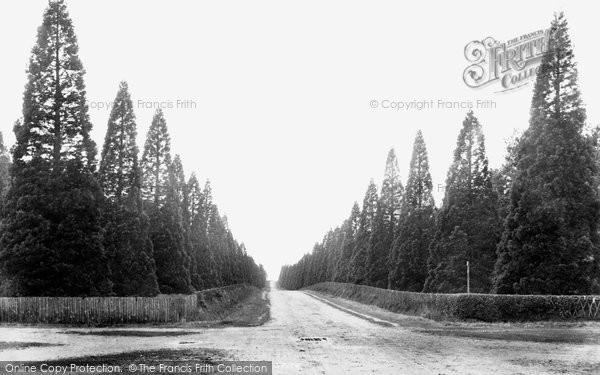 Photo of Finchampstead, Wellingtonia Avenue 1906