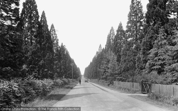 Photo of Finchampstead, Wellingtonia Avenue 1927