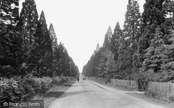 Finchampstead, Wellingtonia Avenue 1927