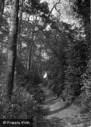 Birch Walk 1914, Fittleworth