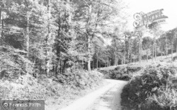 Forest Of Dean, The Forest Near Staunton c.1960