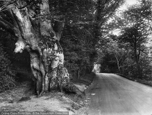 Photo of Forest Row, Old Beech Tree Showing Boars Head 1927