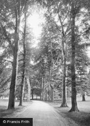 Fountains Abbey, Studley Park, Beech Avenue 1914
