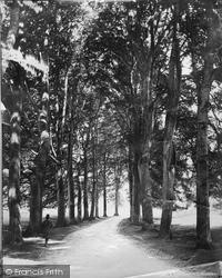 Fountains Abbey, Studley Park, Beech Avenue c.1885