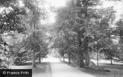 Fountains Abbey, Yew Walk 1914