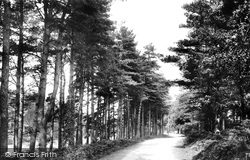 Frensham, Common, Churt Road 1914