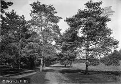 Frensham, Pathway To Little Pond 1921