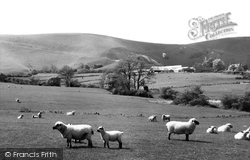 Fulking, South Down Sheep c.1955