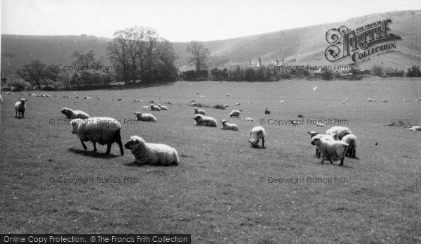 Photo of Fulking, South Down Sheep c.1955