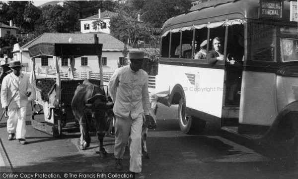 Photo of Funchal, Oxen And Bus c.1955
